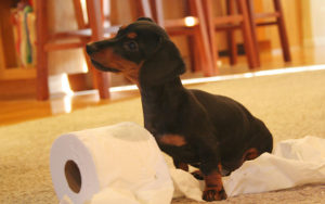 Read more about the article Insights on Potty Training