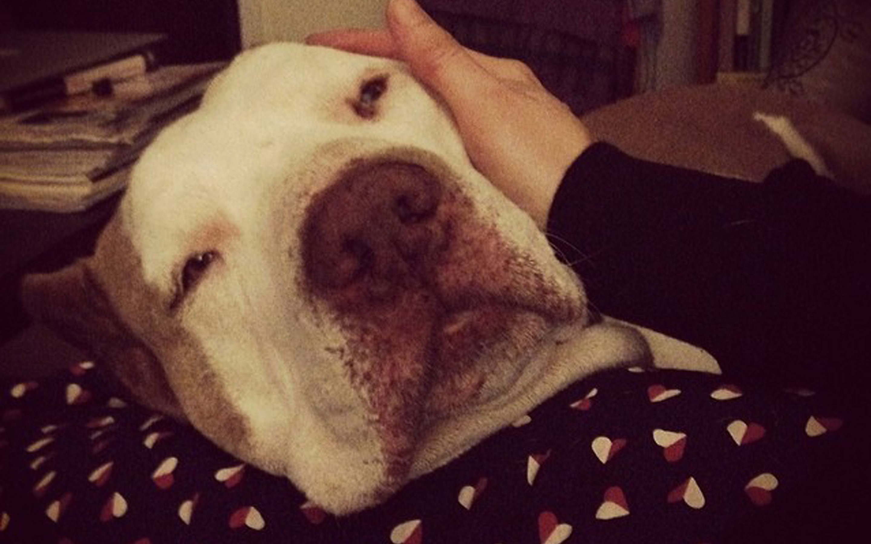 Read more about the article A Rescued Dog Story – Lucille