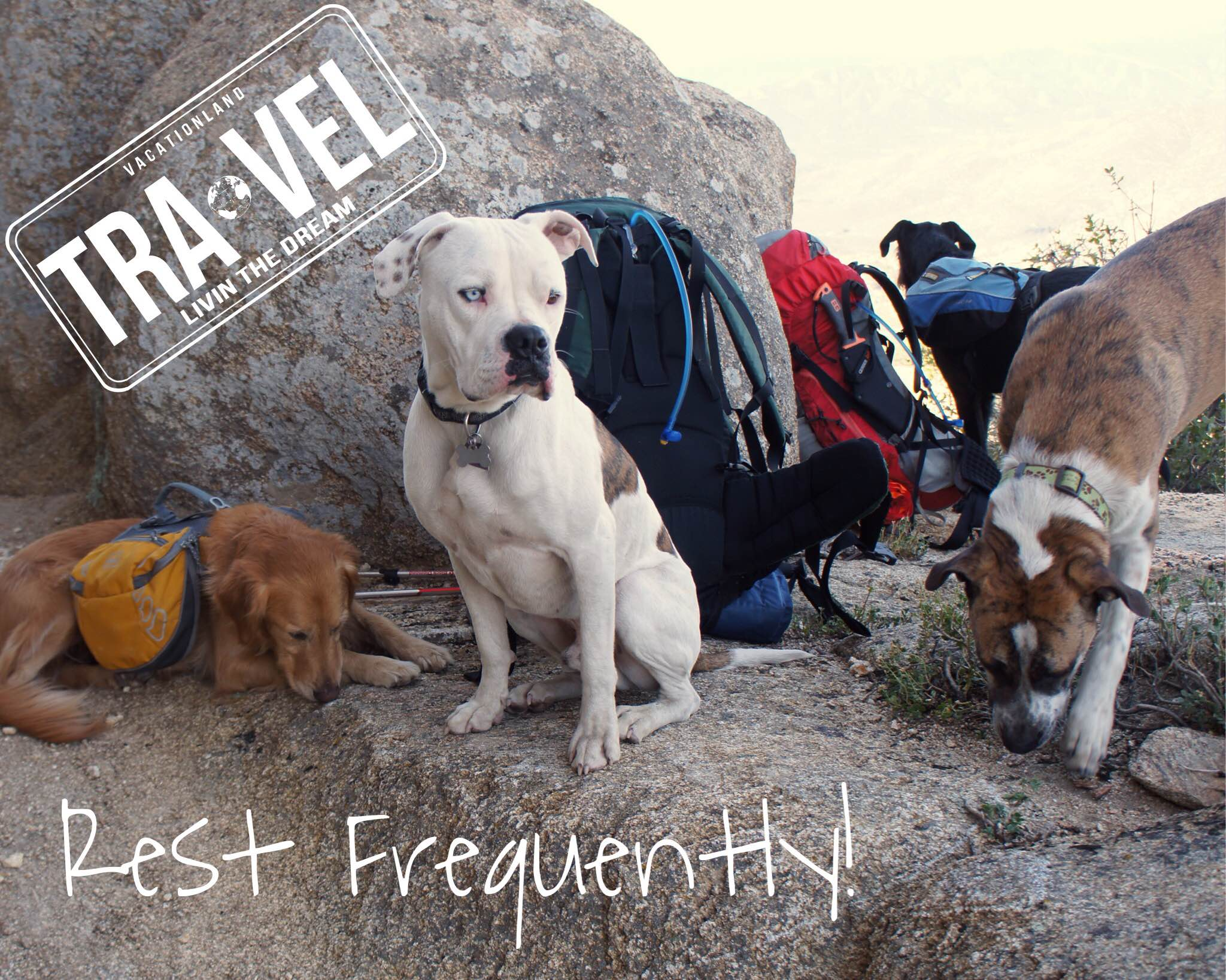 5 Tips for Camping with Your Rescue Dog