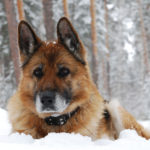 8 Ways to Keep a Senior Dog Safe During Winter