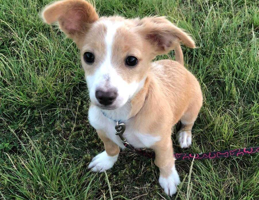 Pablo Picasso – 4 month old spaniel mix