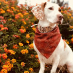 7 FALL SAFETY TIPS FOR FIDO THIS SEASON!
